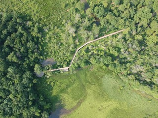 Aerial shot over forest and a walk way