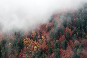 Gęsta mgła obejmuje żółte i zielone jesienne drzewa, widok z góry