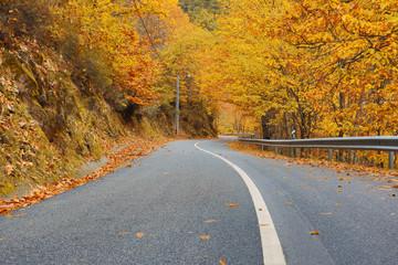 Piękny typowy krajobraz jesień