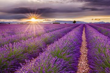 Żywe pole lawendy podczas malowniczego zachodu słońca. Niekończące się pola, typowy znak regionu. Niesamowity zapach i widok. Podróż, wakacje, wakacje, relaks, spokój.