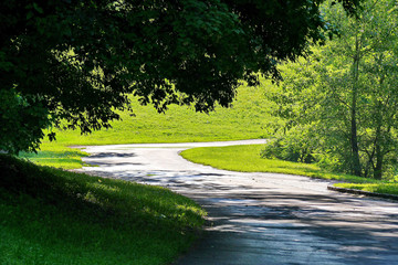 winding path under the hanging branches of trees in the park near the lawn