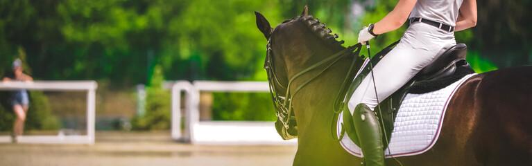Koń poziomy baner do projektowania nagłówka strony. Koń ujeżdżeniowy i jeździec w białym mundurze podczas zawodów jeździeckich. Plam zieleni drzewa jako tło.