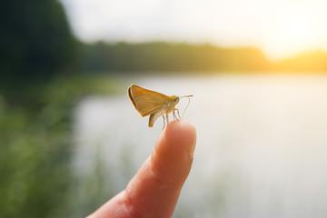 Little Butterfly on Human Finger  in Sea Background