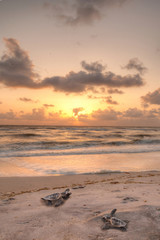 Golden sunset over hatchling turtles Caretta caretta