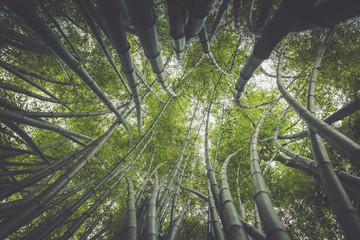 Zielony bambusowy drzewo w ogródzie.