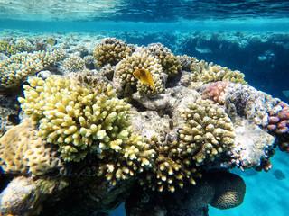 Coral reefs under water