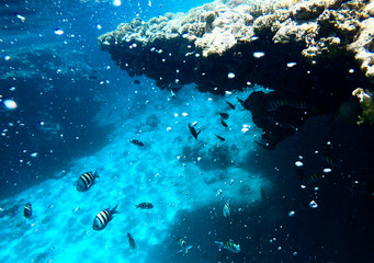 Huge amount of fish, red sea, coral reefs