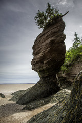 Hopewell Rocks a