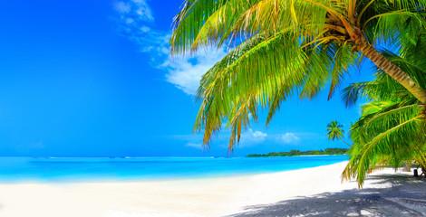 Wymarzona plaża z palmami na białym piasku i turkusowym oceanie