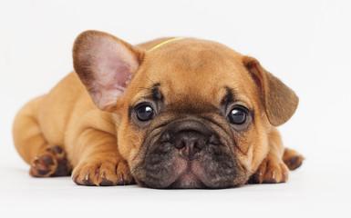 cute puppy looking