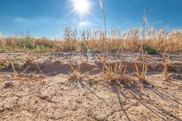 Sonne Getreide Trockenheit Ernteausfall
