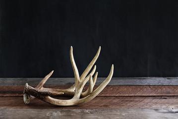 Para poroża jelenia