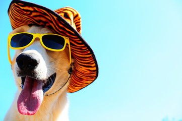 happy dog in summer hat and with sunglasses