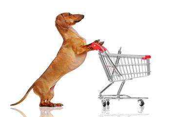 Pretty dachshund dog pushing shopping trolley against white background