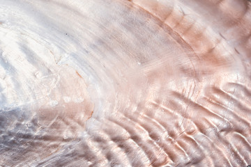 luxury nacre seashell background texture close up
