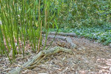 Bambusowa ścieżka w naturze