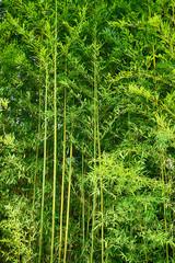 zielone liście bambusa tekstury