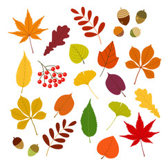 秋の紅葉と木の実set