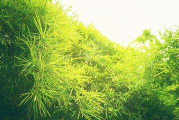 Zielonego liścia miękka ostrość z zbliżeniem w natura widoku na zamazanym greenery tle w ogródzie z kopii przestrzeni use dla projekt tapety pojęcia.