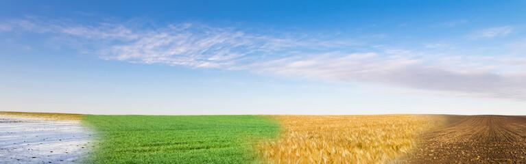 Panoramiczny kolaż z czterech sezonów pola pod błękitne niebo