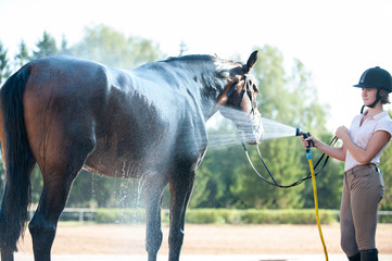 Young teenage girl equestrian washing her brown horse in shower