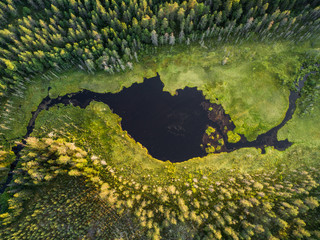 Aerial view of forest and little lake or pond in boreal aka taiga forest in Finland