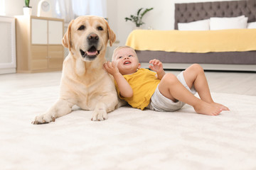 Adorable yellow labrador retriever and little boy at home