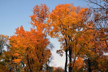 Jesień w parku. Liście, drzewa.