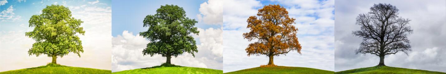 Drzewo w zmianie pór roku