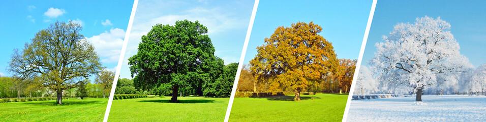 Cztery pory roku - panorama drzewa