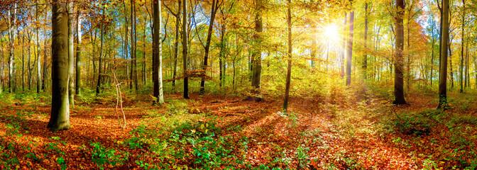 Panorama jesiennego lasu z jasnym słońcem świecącym przez drzewa