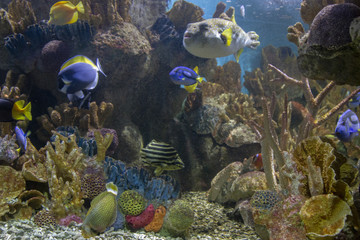 The Boston Aquarium has a wide variety of Fish, Animals, and Corals
