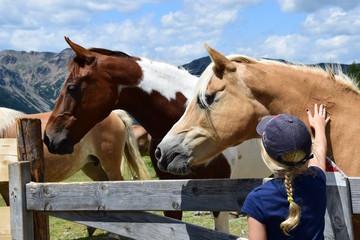 Junges Mädchen streichelt auf einer Almwiese die Pferde