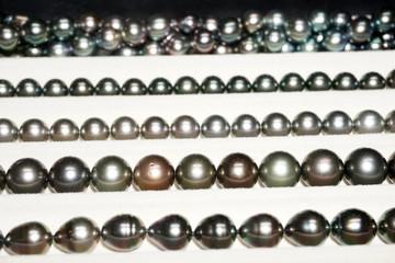 black pearls of french polynesia