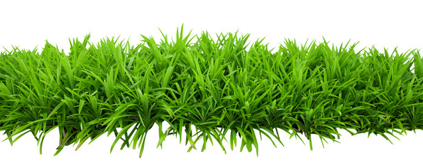 Green bush leaves isolated on white background with clipping path included