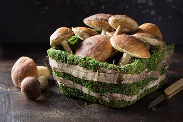 Forest mushrooms in basket with moss, autumn harvest, boletus, white and aspen. Raw fresh mushrooms on dark background