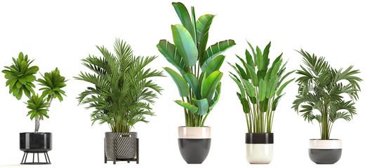 kolekcja roślin ozdobnych w doniczkach