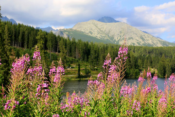 nice wild flowers in mountains