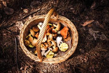 mushroom foraging wicker basket