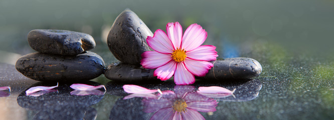 Black spa stones and pink cosmos flower isolated on green.