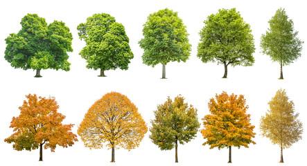 Jesieni lata drzew odosobniony biały tło