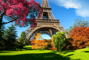 Drzewa w parku w Paryżu jesienią