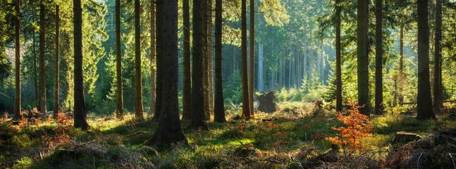 Panoramiczny słoneczny las jesienią