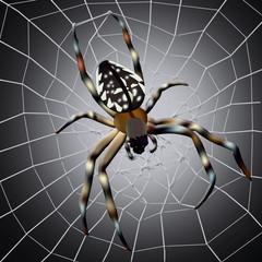 Spider web. Illustration of spider with spider web on dark background