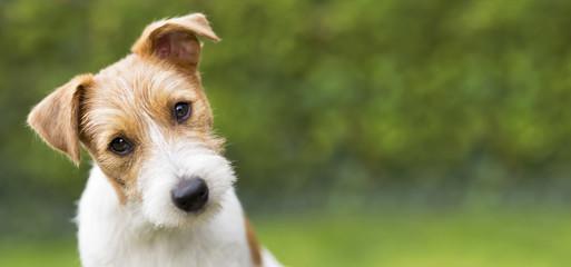 Śmieszna głowa szczęśliwego ślicznego Jacka Russella szczeniaka psa - pomysł na baner internetowy