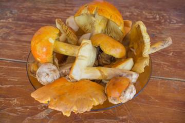 Caesar's mushroom - Amanita caesarea. Most delicious mushroom in the world