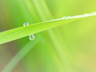 Macro waterdrop on green rice plant 2
