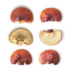 Lingzhi Mushroom Isolated on white background