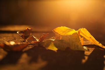 jesienne liście o zachodzie słońca