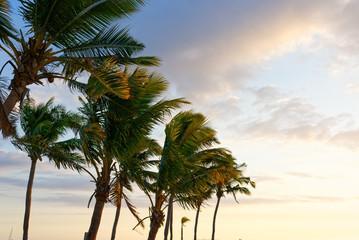 Palma na białej, piaszczystej plaży